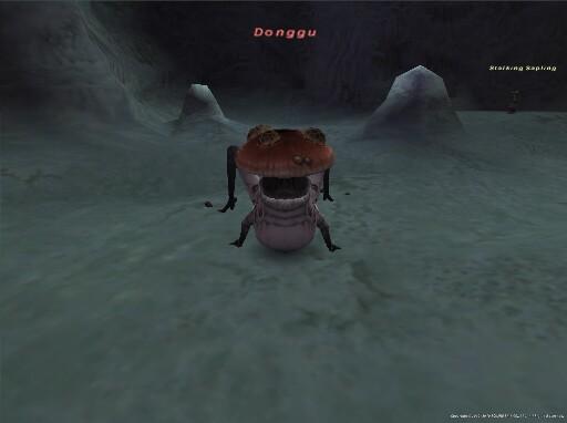 Donngu - ドング